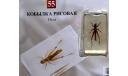 Насекомые и их знакомые - № 55 Кобылка рисовая, журнальная серия Насекомые и их знакомые (DeAgostini)