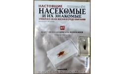 Насекомые и их знакомые - № 65 Царственная цикада Помпония (Pomponia imperatoria)