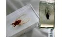 Насекомые и их знакомые - № 65 Царственная цикада Помпония (Pomponia imperatoria), журнальная серия Насекомые и их знакомые (DeAgostini), scale0